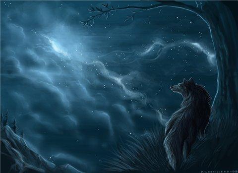 Фото черной волчицы
